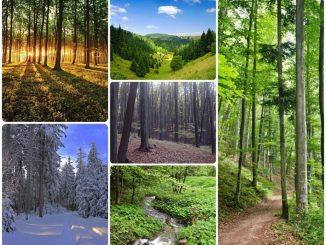 deň lesov 2021