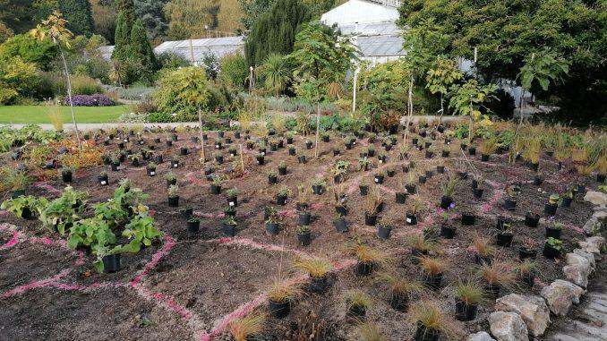 Výsadba nových stromov v Botanickej záhrade UPJŠ vďaka OZ BotaniKE